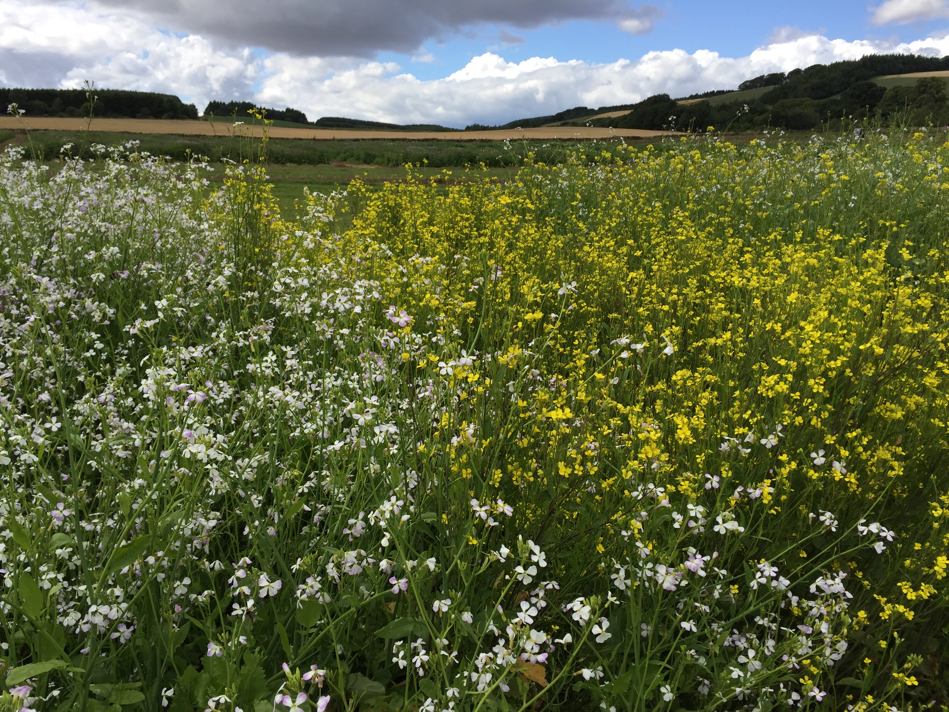 Wild flowers, agricultural crops and woodland trees illustrating a healthy natural balance of plants on Scottish farmland: image by Fay Young